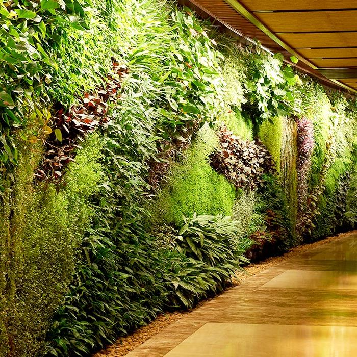 Wide plant wall, in the corridor of an hotel
